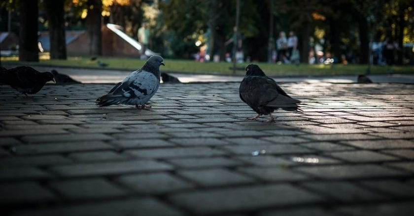 Top 5 Businesses That Should Care About Operating an Effective Pigeon Control Program