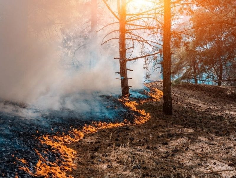FEMA Fire Management Assistance Granted for the Bush Fire in Arizona