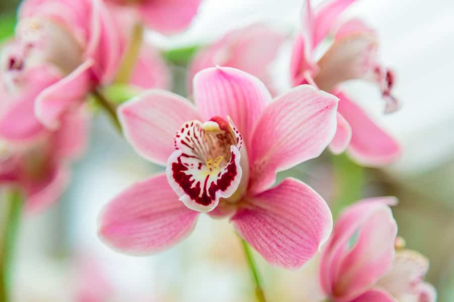 Orchid Types Explained - A Mesmerizing Flower